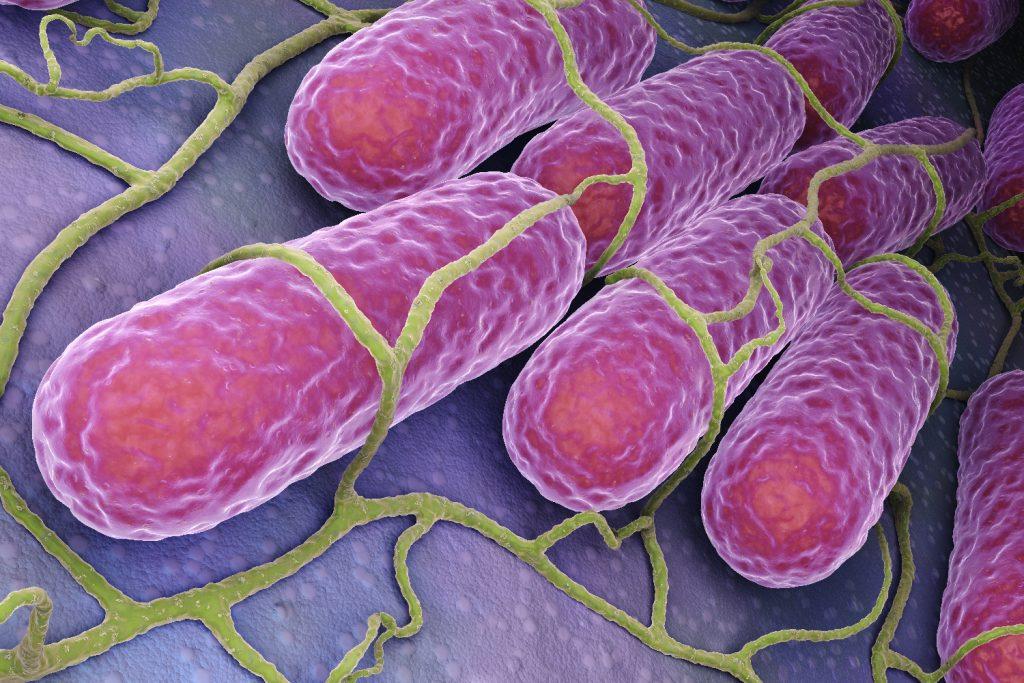 disbiosis, trànsito ràpido, enteritis, Clostridium, enterobacteria, diarrea, PlusVet Animal Health, aditivos para alimentos, aditivos para alimentación animal, extractos de plantas, aceites esenciales, fitobióticos, fitoquímicos, fitogénicos, reemplazar antibioticos promotores del crecimiento, productos naturales, salud digestiva, aves, avicultura, porcino, cerdos, rumiantes