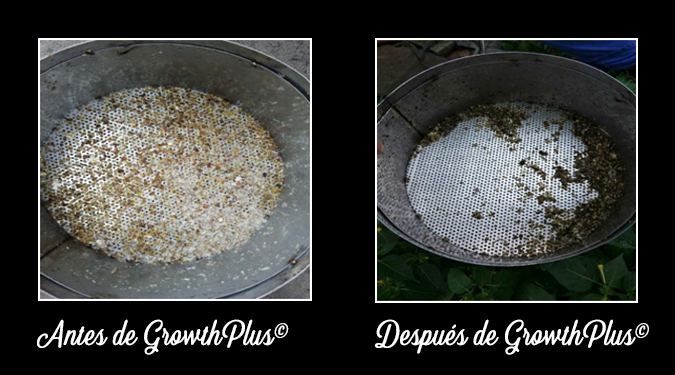 GrowthPlus-Necrotic-enteritis-feces-appearance-before-and-after-2-ESP