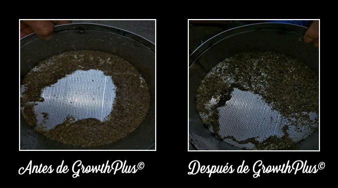 GrowthPlus-Necrotic-enteritis-feces-appearance-before-and-after-3-ESP