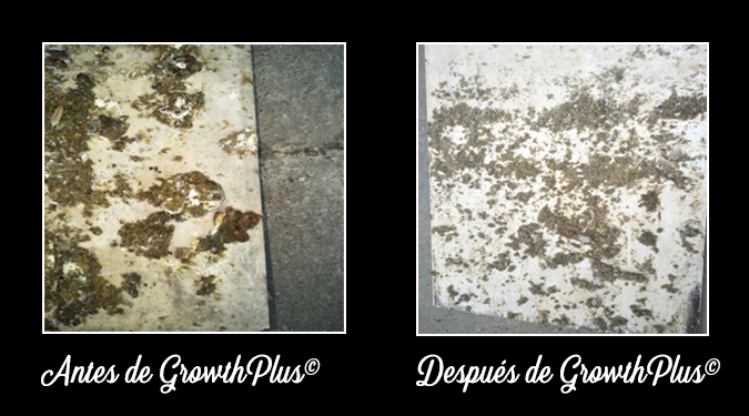 GrowthPlus-Necrotic-enteritis-feces-appearance-before-and-after-4-ESP