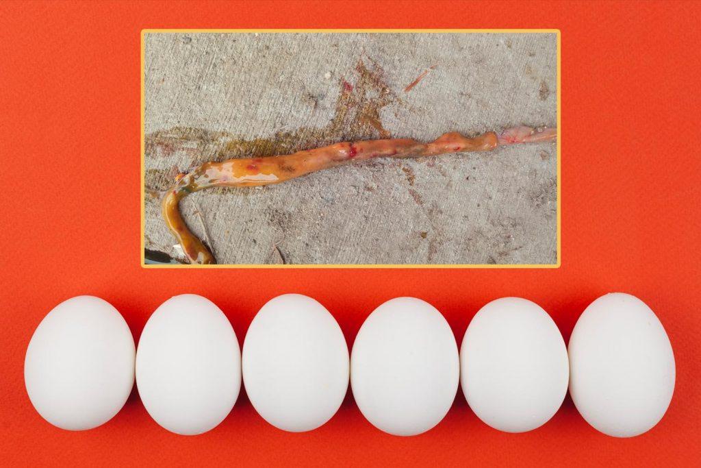 PlusVet Animal Health, aditivos para alimentos, aditivos para alimentación animal, extractos de plantas, aceites esenciales, fitobióticos, fitoquímicos, fitogénicos, gallinas ponedoras, ponedoras, reproductores, aves de corral, pollos de engorde, pollitos, pollo, zinc, agua salina, cloruro de sodio, calidad del huevo, cáscara de huevo, yema, huevos rotos, grietas, cáscara, tasa de puesta, producción de huevos, huevos defectuosos, fracturas, selenio, magnesio, manganeso, zinc, HÍGADO, fertilidad