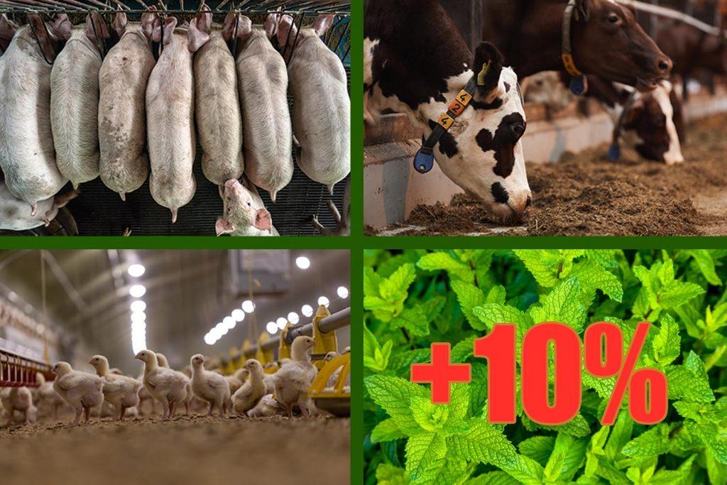 estrés térmico, estrés por calor, hígado, aves, fertilidad, PlusVet Animal Health, aditivos para alimento animales, extractos de plantas, aceites esenciales, fitobióticos, fitoquímicos, fitogénicos, reemplazar antibioticos promotores del crecimiento, productos naturales, salud digestiva,