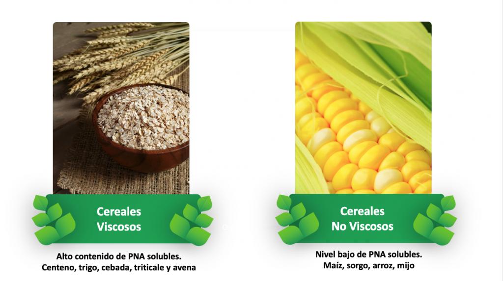 PlusVet Animal Health, aditivos para alimentos, aditivos para alimentación animal, extractos de plantas, aceites esenciales, fitobióticos, fitoquímicos, fitogénicos, reemplazar antibioticos promotores del crecimiento, productos naturales, salud digestiva, aves, avicultura, porcino, cerdos, rumiantes