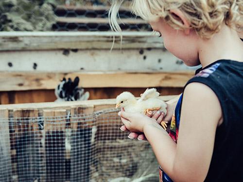 PlusVet Animal Health, aditivos para alimentos, aditivos para alimentación animal, extractos de plantas, aceites esenciales, fitobióticos, fitoquímicos, fitogénicos, gallinas ponedoras, ponedoras, reproductores, aves de corral, pollos de engorde, pollitos, pollo, zinc, agua salina, cloruro de sodio, calidad del huevo, cáscara de huevo, yema, huevos rotos, grietas, cáscara, tasa de puesta, producción de huevos, huevos defectuosos, fracturas, selenio, magnesio, manganeso, zinc